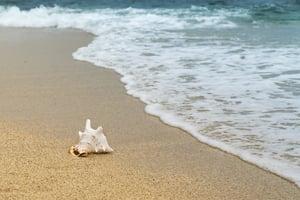 shellfish-3062011_1920